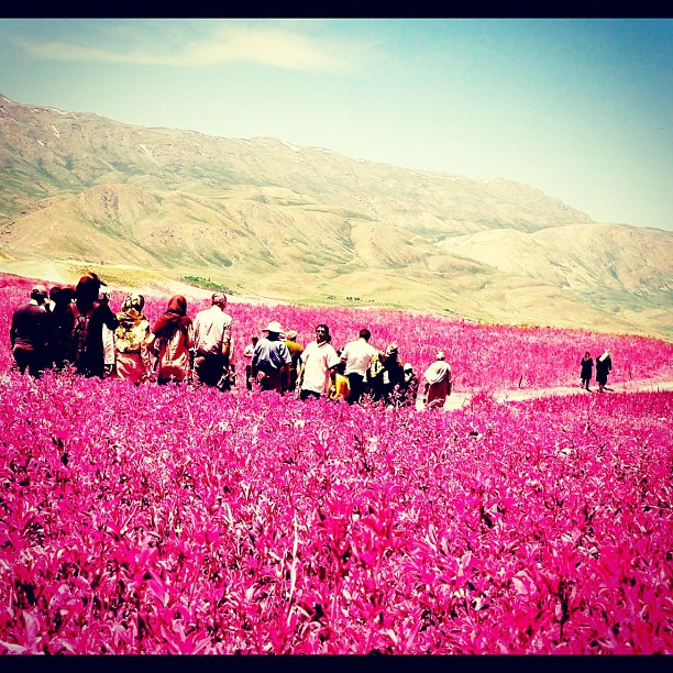 Feature: Instagrams from Iran (picture compilation)